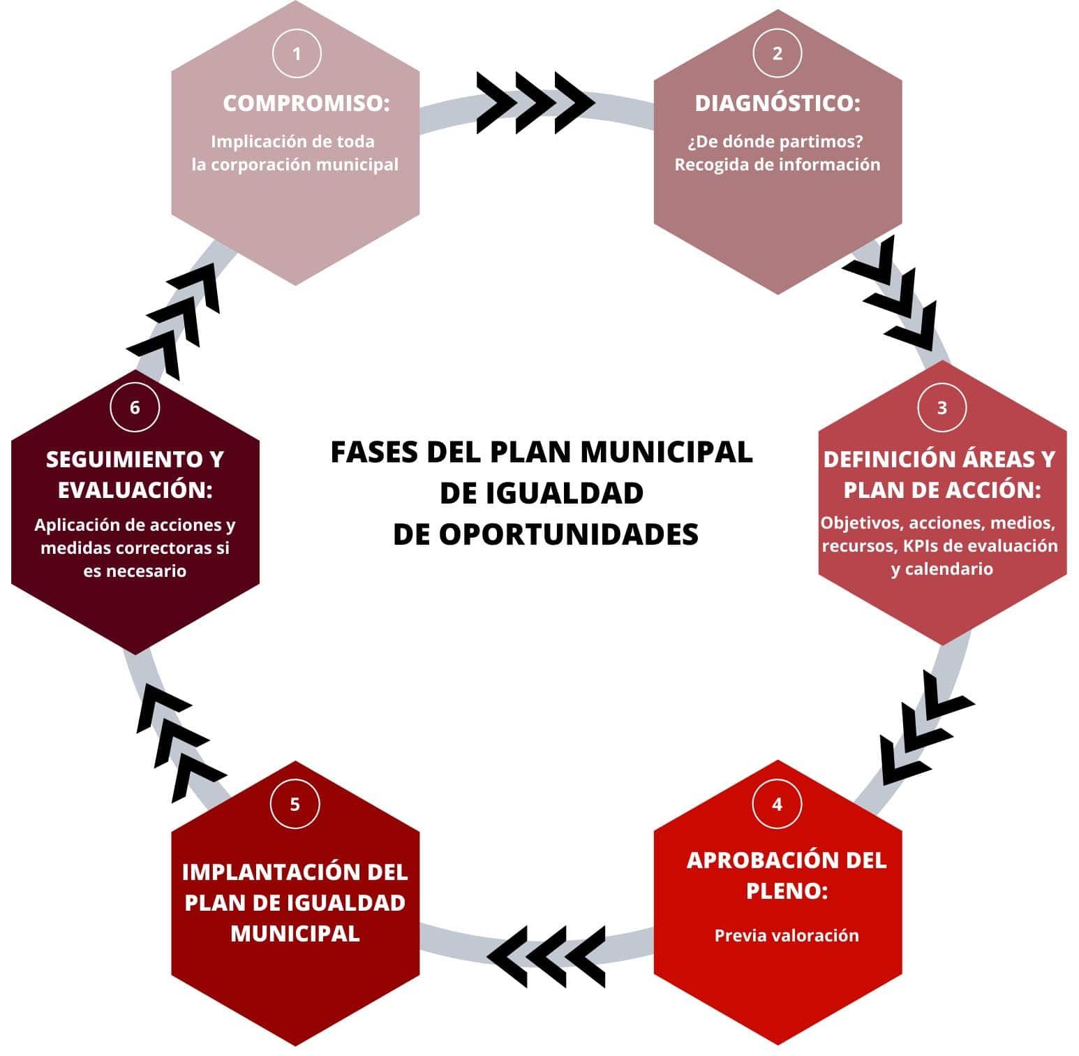 Fases plan municipal de igualdad